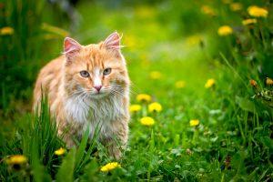 inentingen voor katten