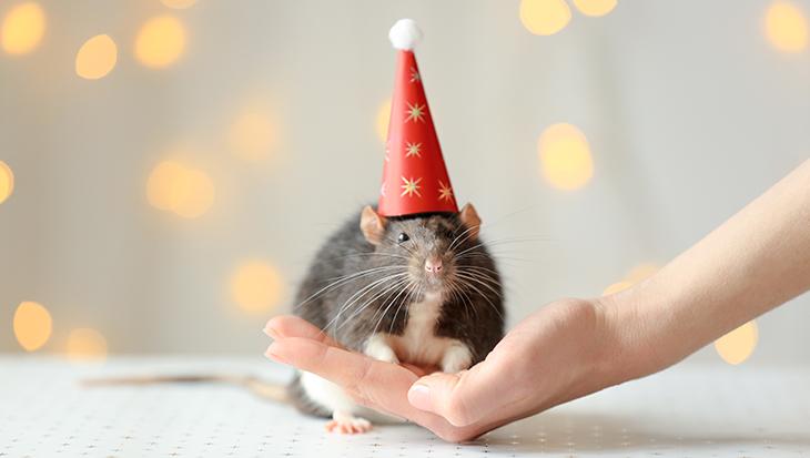 Hoe kleine ratjes groot zijn