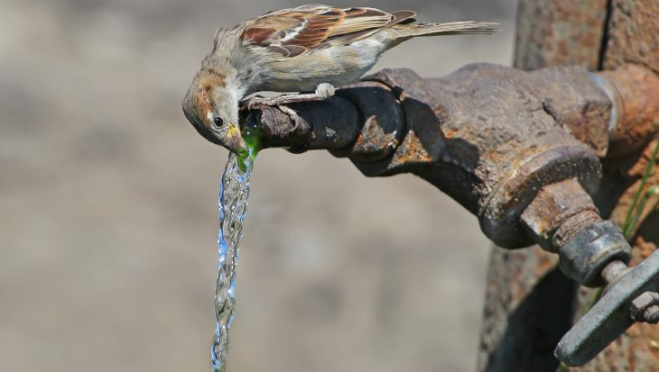 Geef vogels extra water in warme periode