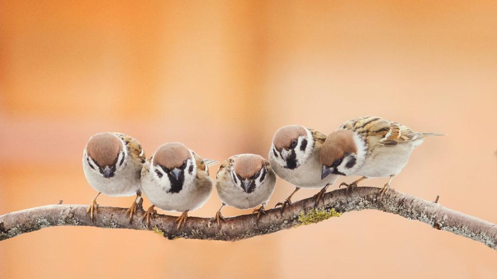 vogels water terugkeren