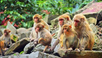 Dierenbeschermingsorganisaties waarschuwen toeristen: 'Let op dierenleed tijdens vakantie'