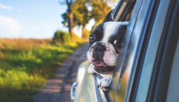 partner, partnercontent, headline, hond, veilig, onderweg
