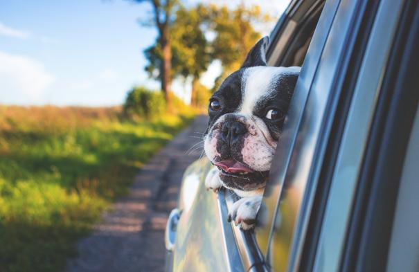 Hond veilig vervoeren in de auto