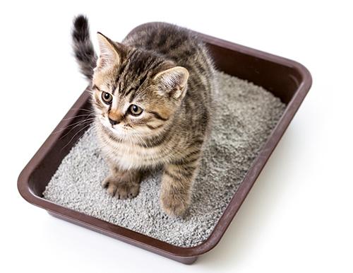 Kattenbak is iets wat katten zeker nodig hebben