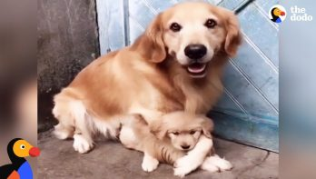 Blijf van mijn puppy af, ze is van mij!