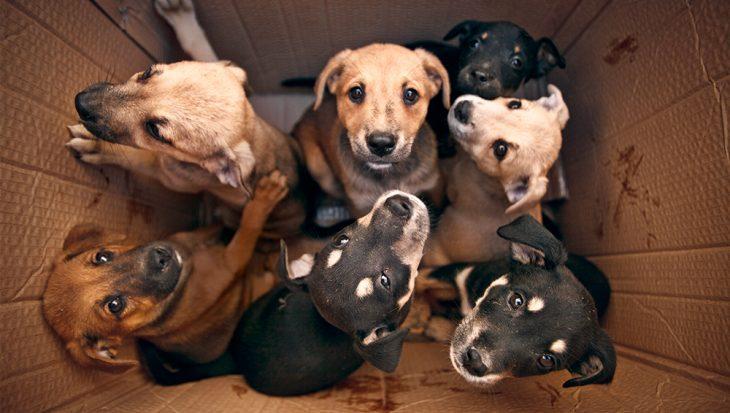 Handel in pups is nog altijd booming business