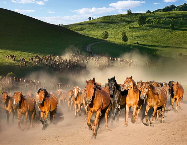paarden leven in een kudde
