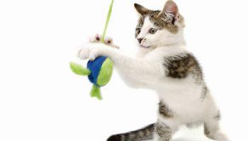 Dingen die katten nodig hebben