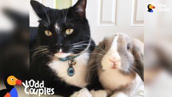 Feisty kat met konijn als beste vriend