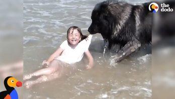 Hond 'redt' bazinnetje uit de zee
