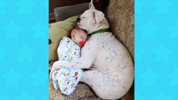 Honden en baby's zijn beste vrienden