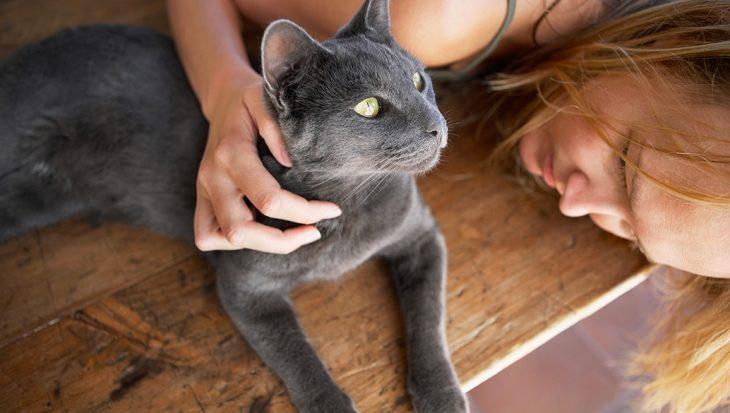 De kattentaal: miauwen, bijten en staartbewegingen