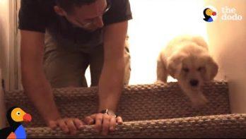 Puppy probeert voor de eerste keer de trap af te gaan