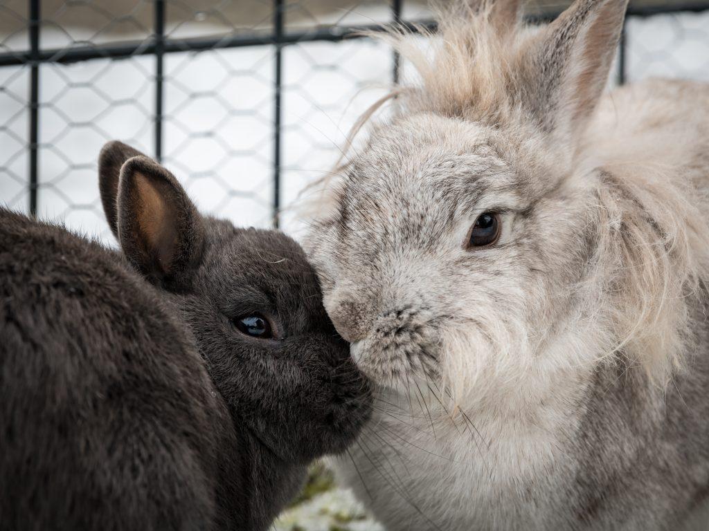 Koppel je konijnen: neutraal terrein