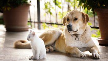 Over soortgenoten en de sociale behoefte van huisdieren