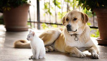 Soortgenoten zijn hond en kat niet, maar velen kunnen prima met elkaar overweg.