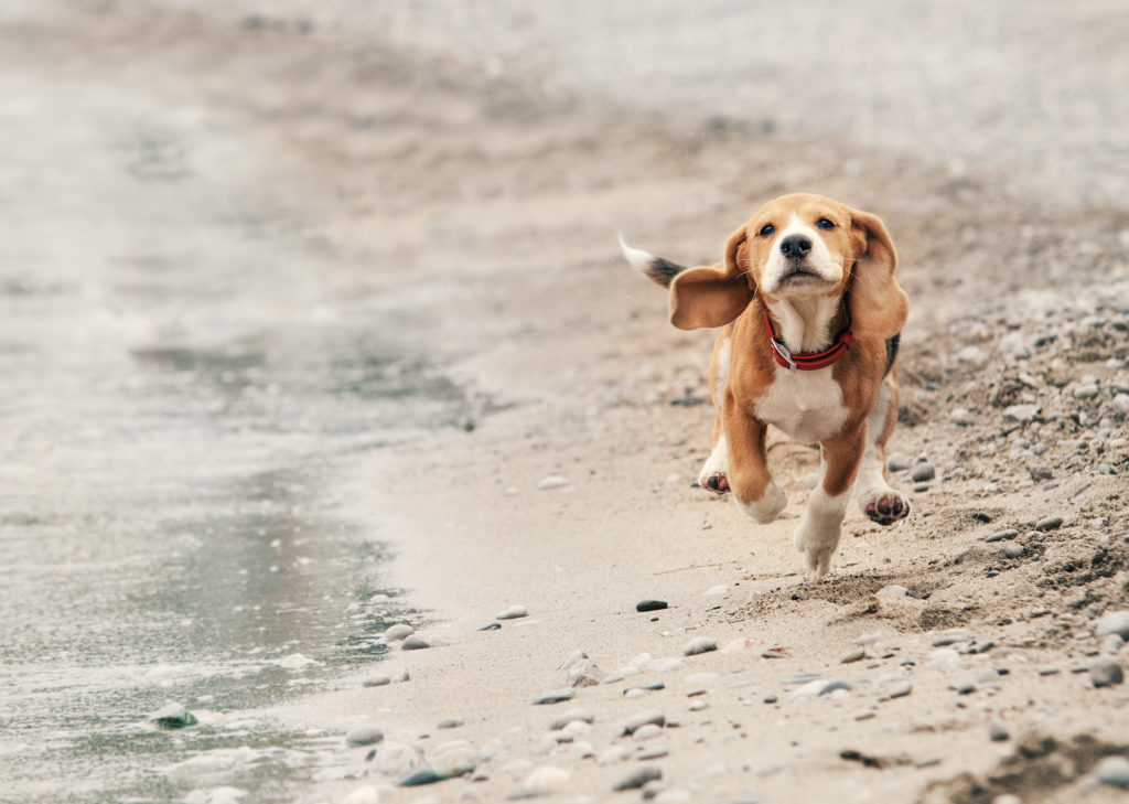 opspringen hond 2