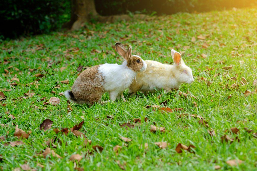koppel je konijnen: rijden
