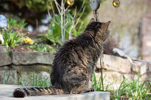 Katten hebben een uitkijkpunt nodig