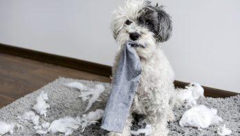 Schade en je huisdier: hoe zit het met de verzekering?