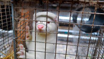 Hoe zit het met dierenrechten?