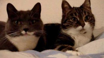 De twee pratende katjes