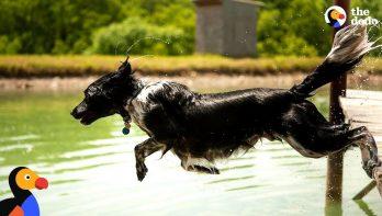Hond rent en springt in het water