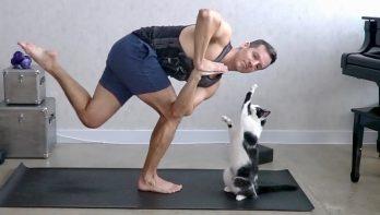 Katten plagen baasje tijdens zijn yoga oefeningen