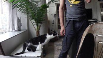 Kodi de meest aanhankelijke kat ter wereld