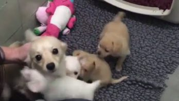 Moeder hond opgetogen na hereniging met haar puppies