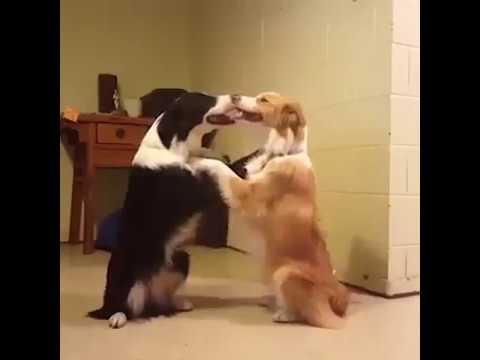 Romantische komedie met dieren