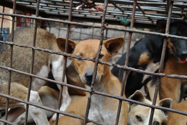 Dieren gered van gruwelijke vleesmarkten