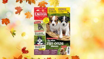 Hart voor Dieren oktober