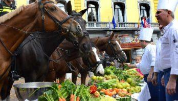 Buffet voor politiepaarden
