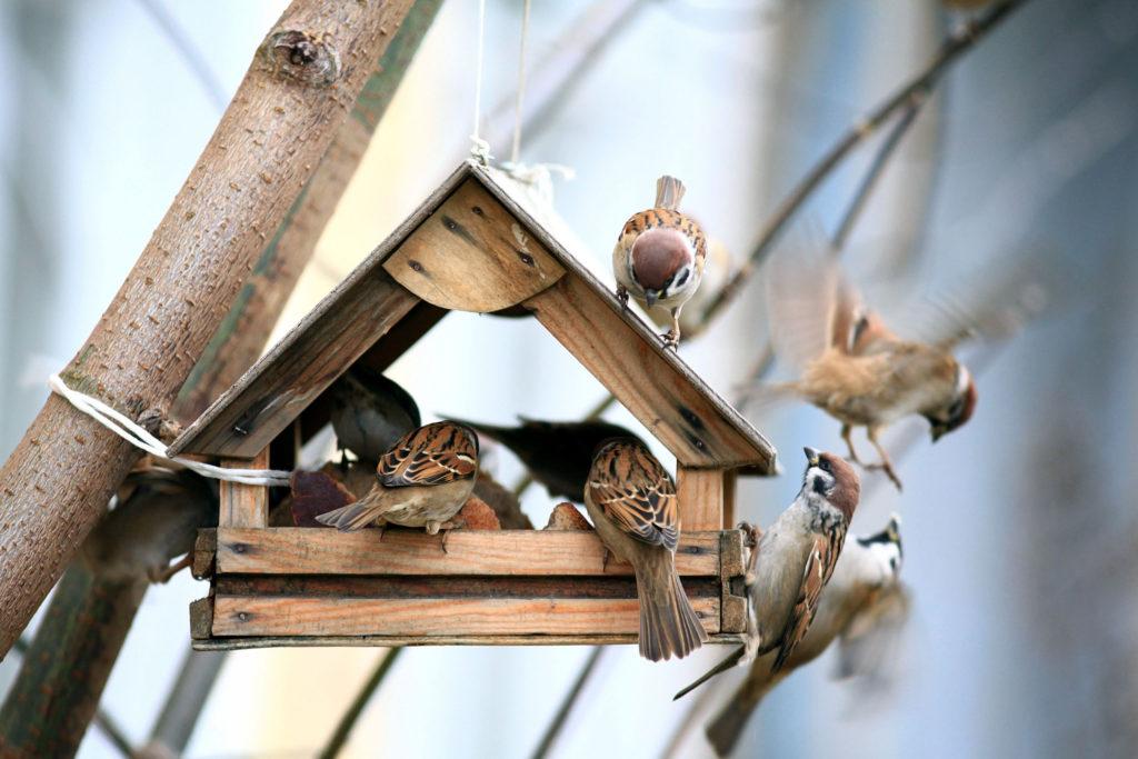 vogels voeren: huisje