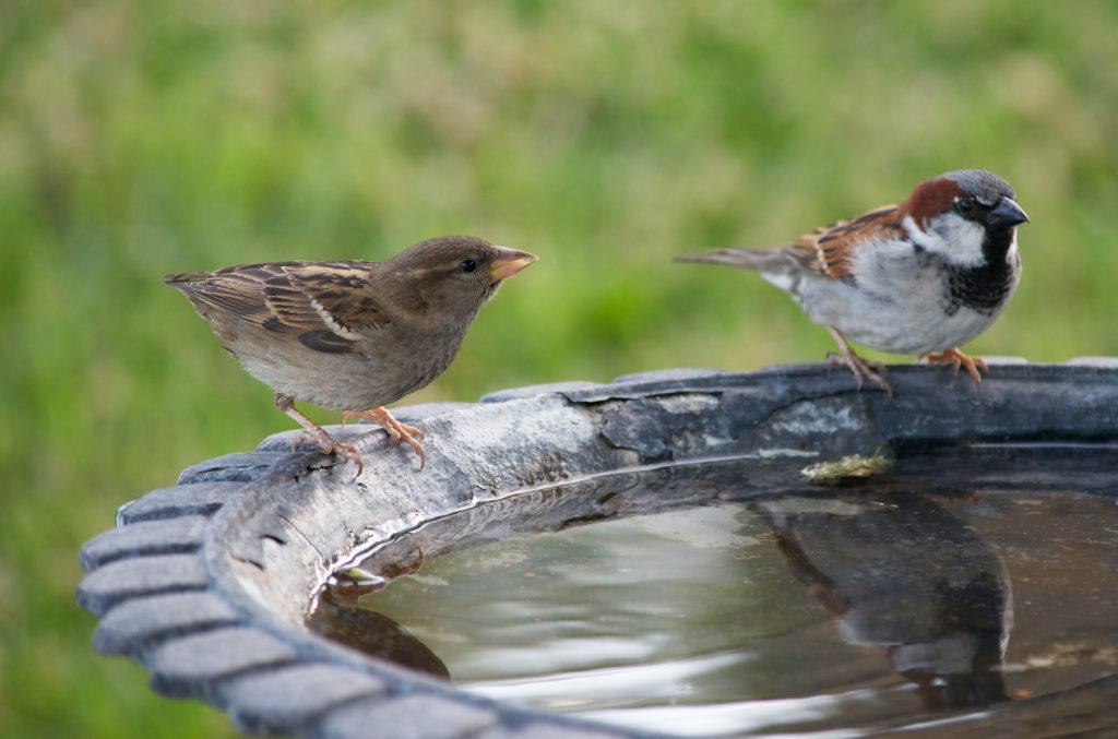 vogels voeren: water