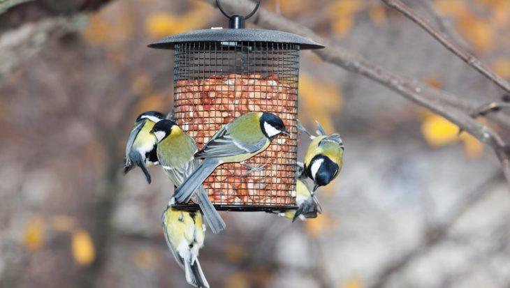 Vogels voeren; hoe en wat?