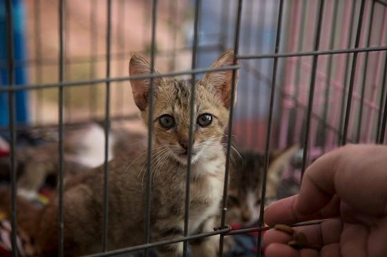 Noodhulp aan dieren op Sulawesi na tsunami