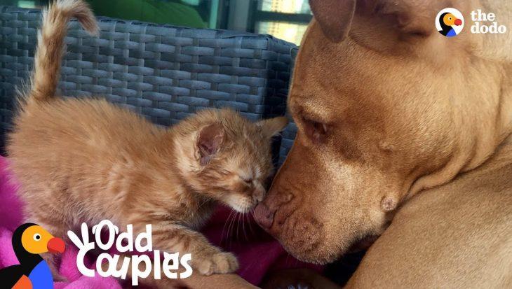 Honden die van andere dieren houden