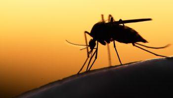Muggenoverlast