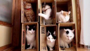 Het wel en wee in kattenhotel ´De doos´