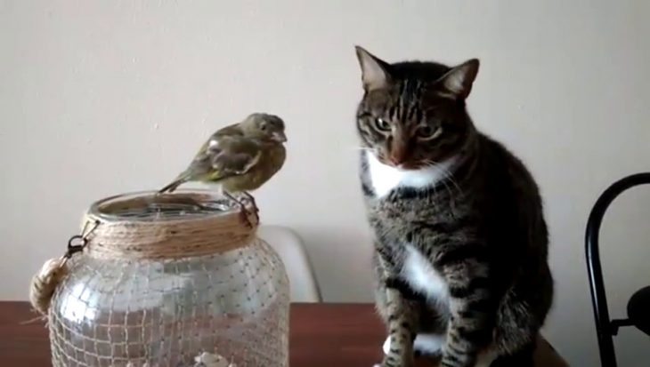 Kat zet zijn beste beentje voor om vriendjes te worden