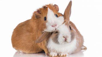 149 winkels stoppen met verkoop dieren