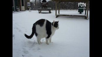 Snowtime!!! Katten spelen in de sneeuw