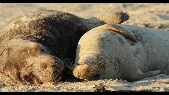 Zeehonden liggen lepeltje-lepeltje