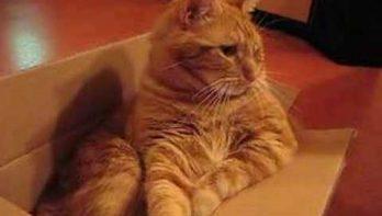 Kat verdedigt Zijn kartonnen doos