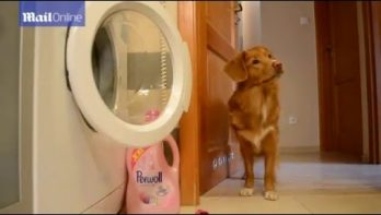 Hond kan de was doen