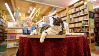 Kat Henry begroet je in boekenwinkel