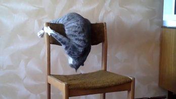Kat met atletische ambities