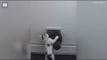 Kitten probeert hond buiten te houden